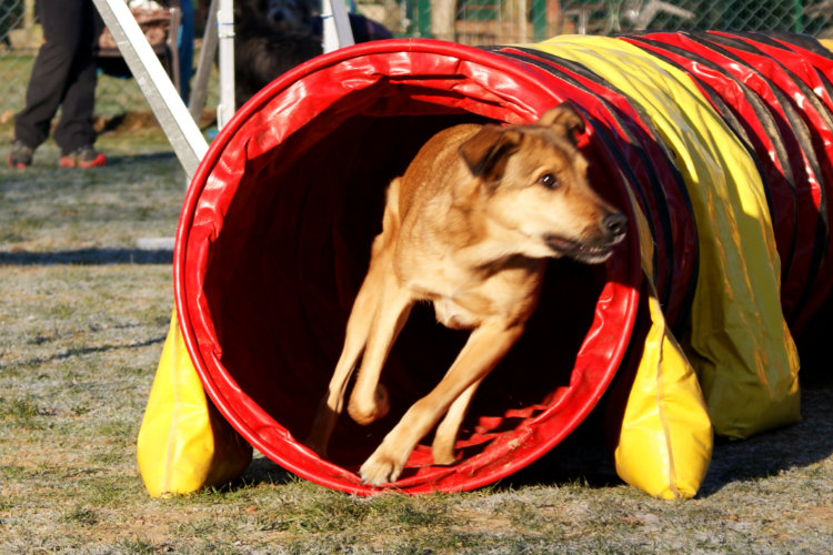 Agility Fun Jumper - Tunnel
